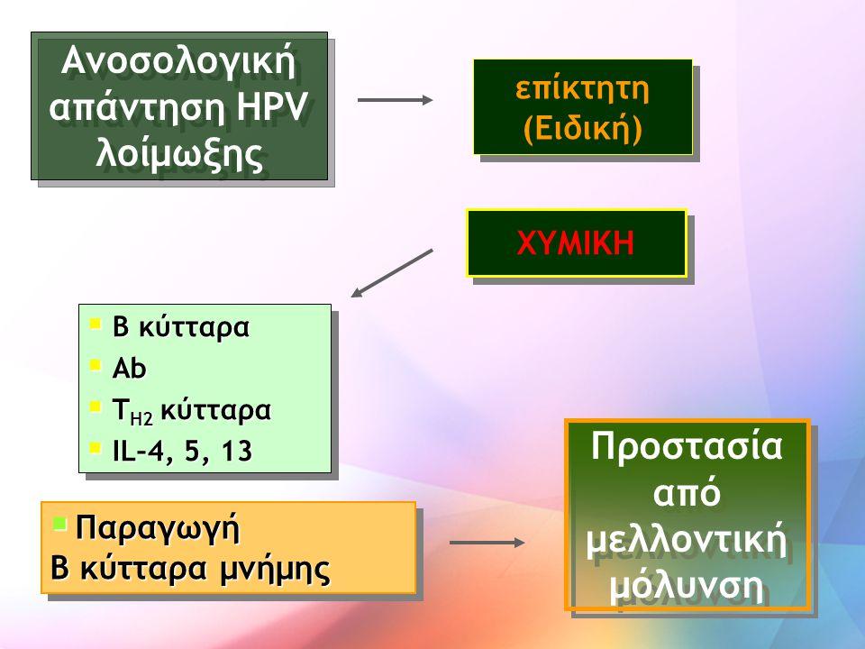 Ανοσολογική απάντηση HPV λοίμωξης  B κύτταρα  Αb  T H2 κύτταρα  IL–4, 5, 13  B κύτταρα  Αb  T H2 κύτταρα  IL–4, 5, 13 επίκτητη (Ειδική)  Παρα