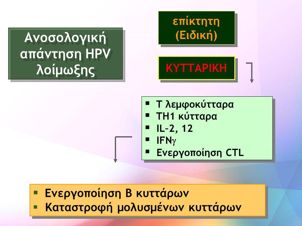 Ανοσολογική απάντηση HPV λοίμωξης  T λεμφοκύτταρα  TH1 κύτταρα  IL–2, 12  IFN   Ενεργοποίηση CTL  T λεμφοκύτταρα  TH1 κύτταρα  IL–2, 12  IFN