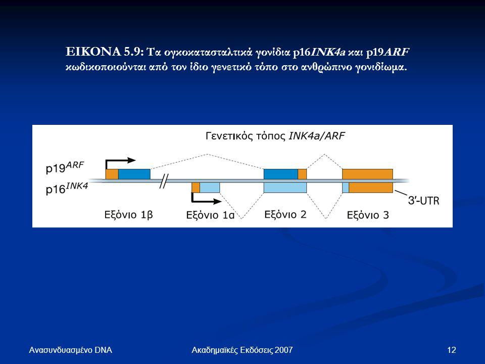 Ανασυνδυασμένο DNA 12Ακαδημαϊκές Εκδόσεις 2007 ΕΙΚΟΝΑ 5.9: Τα ογκοκατασταλτικά γονίδια p16ΙΝΚ4a και p19ARF κωδικοποιούνται από τον ίδιο γενετικό τόπο