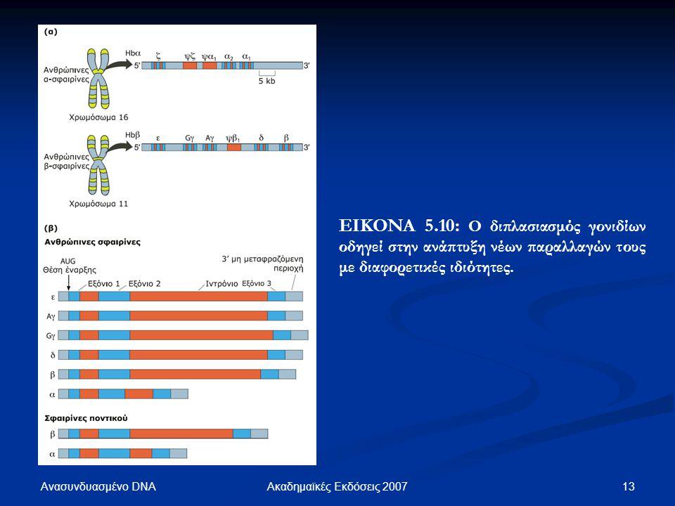Ανασυνδυασμένο DNA 13Ακαδημαϊκές Εκδόσεις 2007 ΕΙΚΟΝΑ 5.10: Ο διπλασιασμός γονιδίων οδηγεί στην ανάπτυξη νέων παραλλαγών τους με διαφορετικές ιδιότητε