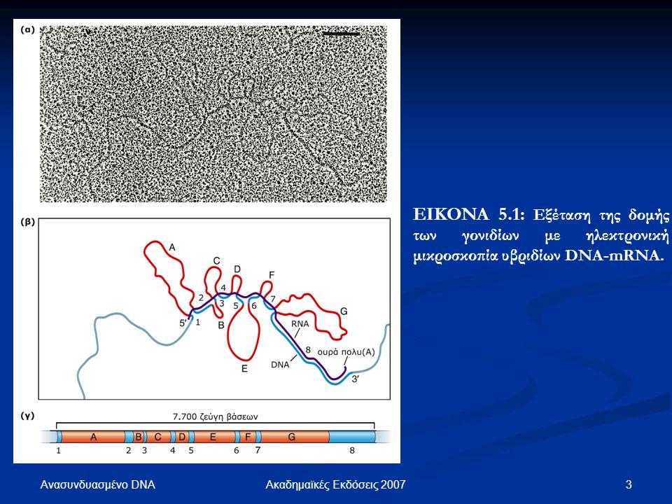 Ανασυνδυασμένο DNA 3Ακαδημαϊκές Εκδόσεις 2007 ΕΙΚΟΝΑ 5.1: Εξέταση της δομής των γονιδίων με ηλεκτρονική μικροσκοπία υβριδίων DNA-mRNA.