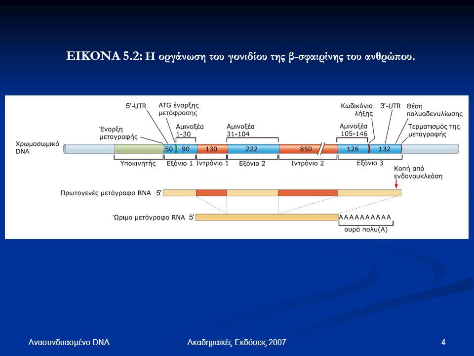 Ανασυνδυασμένο DNA 15Ακαδημαϊκές Εκδόσεις 2007 ΕΙΚΟΝΑ 5.12: ΕΙΚΟΝΑ 5.12: Η δομή ενός ψευδογονιδίου της α-σφαιρίνης του ανθρώπου.