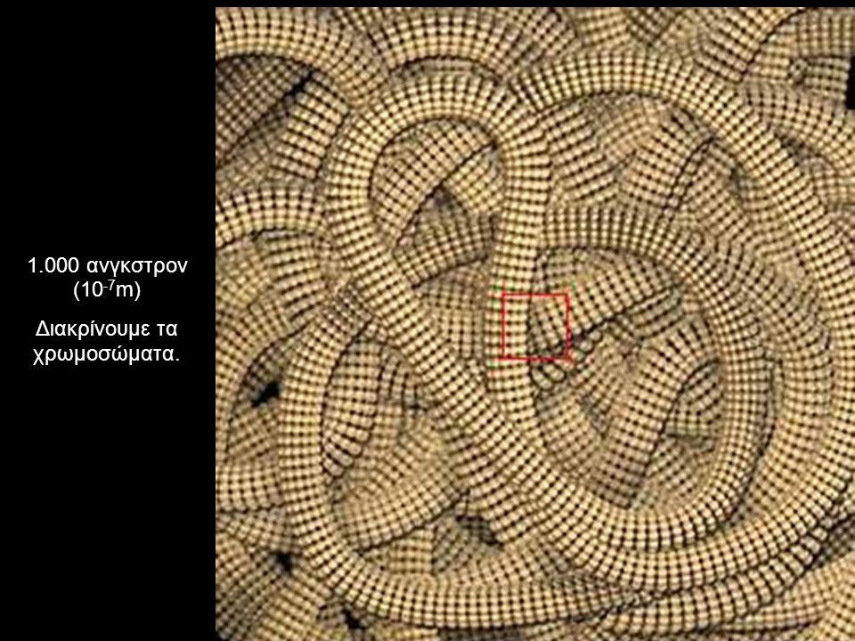 1.000 ανγκστρον (10 -7 m) Διακρίνουμε τα χρωμοσώματα.