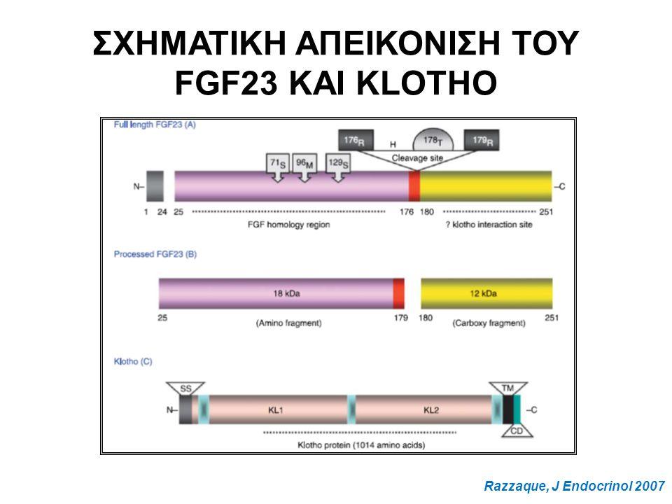 ΣΧΗΜΑΤΙΚΗ ΑΠΕΙΚΟΝΙΣΗ ΤΟΥ FGF23 ΚΑΙ KLOTHO Razzaque, J Endocrinol 2007