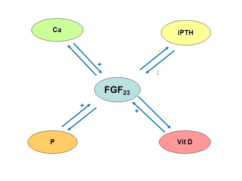 FGF 23 Ca iPTH PVit D - + + + - ; - ;