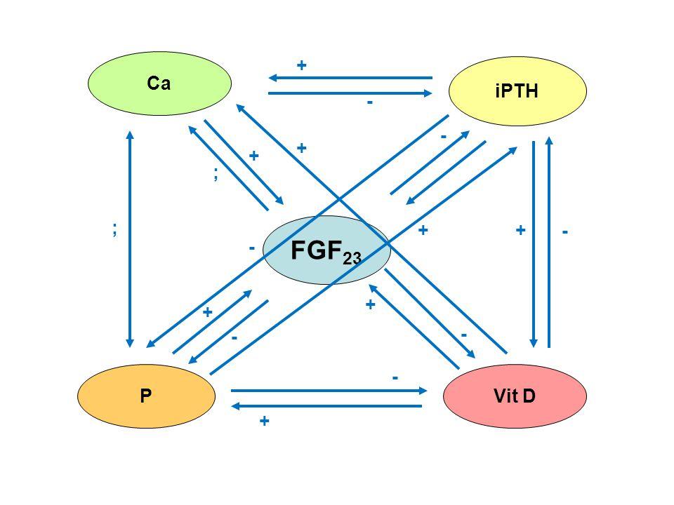 FGF 23 Ca iPTH PVit D - + + - + + + + + - - - - ; + ; -