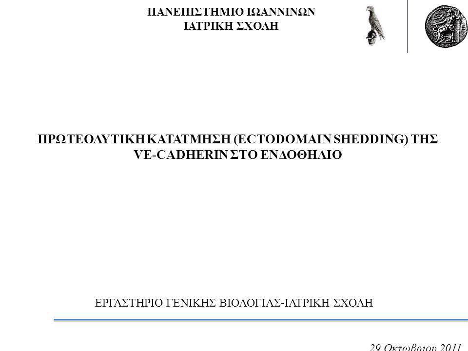 Παραγωγή μονοκλωνικών αντισωμάτων έναντι του εξωκυτταρικού τμήματος της VE-Cadherin.
