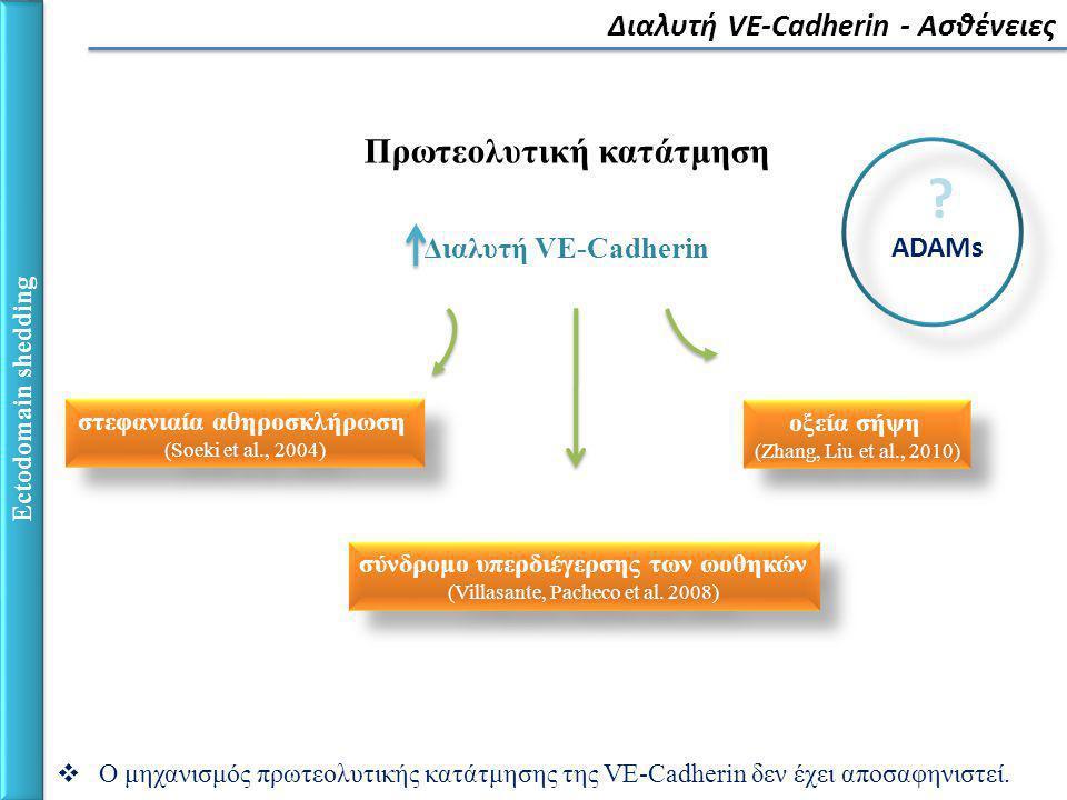 Διαλυτή VE-Cadherin - Ασθένειες Ectodomain shedding Πρωτεολυτική κατάτμηση Διαλυτή VE-Cadherin στεφανιαία αθηροσκλήρωση (Soeki et al., 2004) στεφανιαία αθηροσκλήρωση (Soeki et al., 2004) σύνδρομο υπερδιέγερσης των ωοθηκών (Villasante, Pacheco et al.