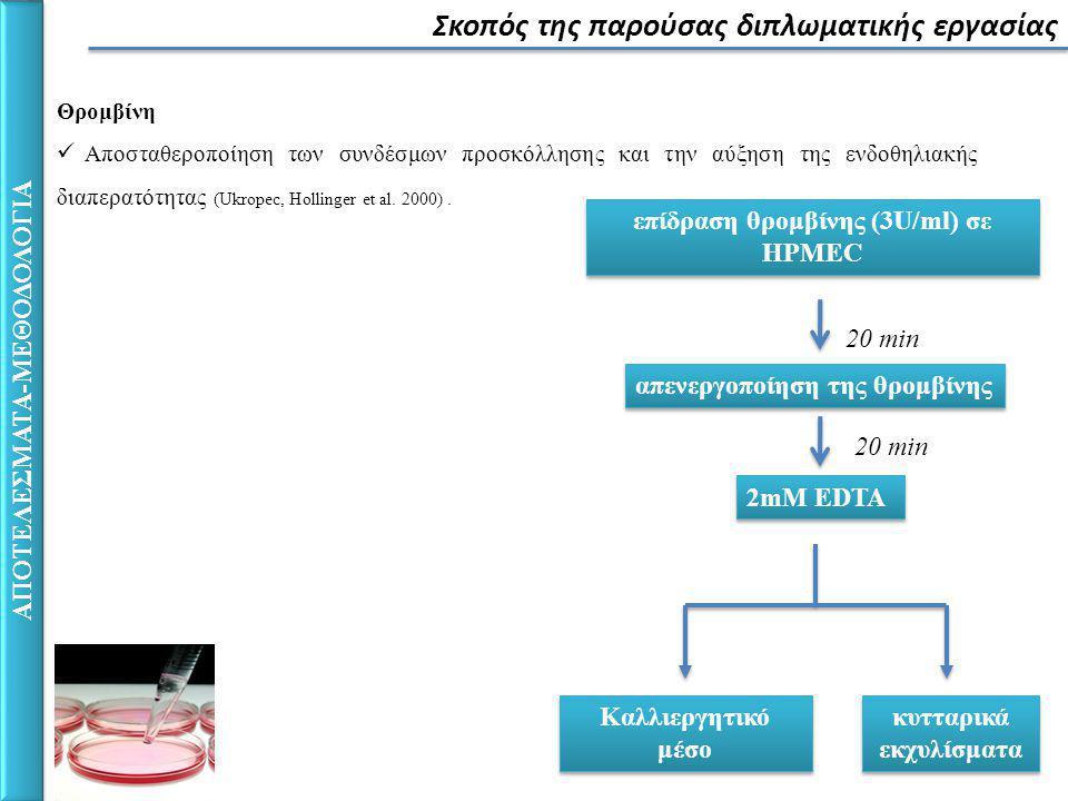 Σκοπός της παρούσας διπλωματικής εργασίας ΑΠΟΤΕΛΕΣΜΑΤΑ-ΜΕΘΟΔΟΛΟΓΙΑ επίδραση θρομβίνης (3U/ml) σε HPMEC 20 min απενεργοποίηση της θρομβίνης Καλλιεργητικό μέσο κυτταρικά εκχυλίσματα 2mM EDTA 20 min Θρομβίνη Αποσταθεροποίηση των συνδέσμων προσκόλλησης και την αύξηση της ενδοθηλιακής διαπερατότητας (Ukropec, Hollinger et al.