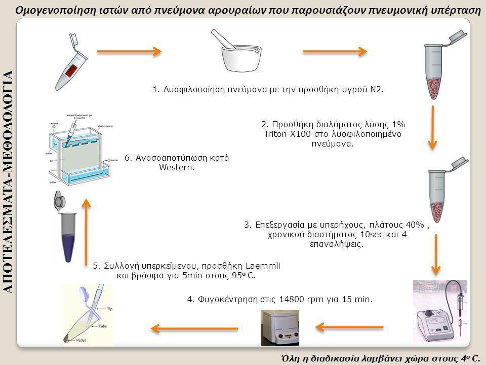 Όλη η διαδικασία λαμβάνει χώρα στους 4 ο C. 1. Λυοφιλοποίηση πνεύμονα με την προσθήκη υγρού Ν2.