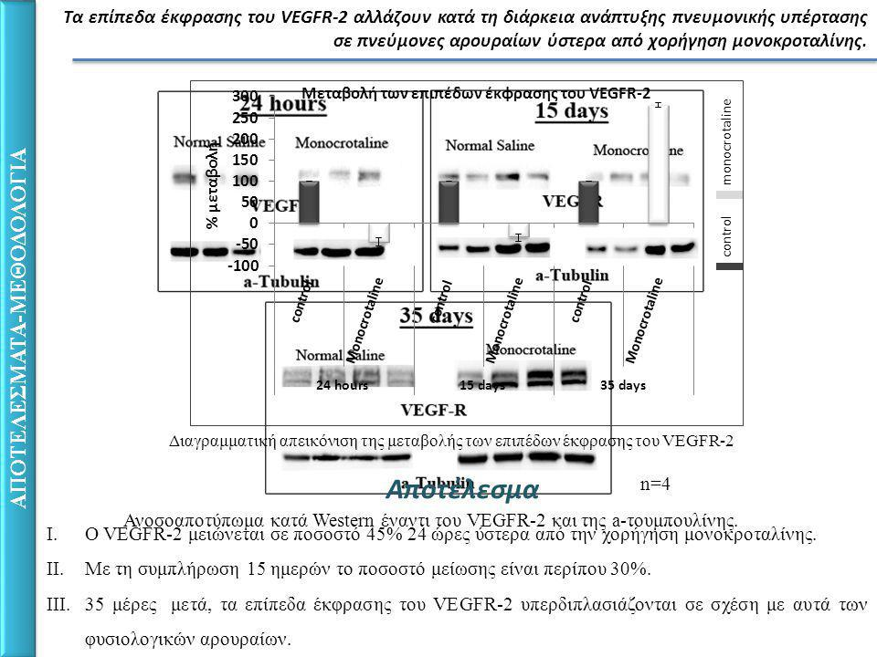 ΑΠΟΤΕΛΕΣΜΑΤΑ-ΜΕΘΟΔΟΛΟΓΙΑ Τα επίπεδα έκφρασης του VEGFR-2 αλλάζουν κατά τη διάρκεια ανάπτυξης πνευμονικής υπέρτασης σε πνεύμονες αρουραίων ύστερα από χορήγηση μονοκροταλίνης.