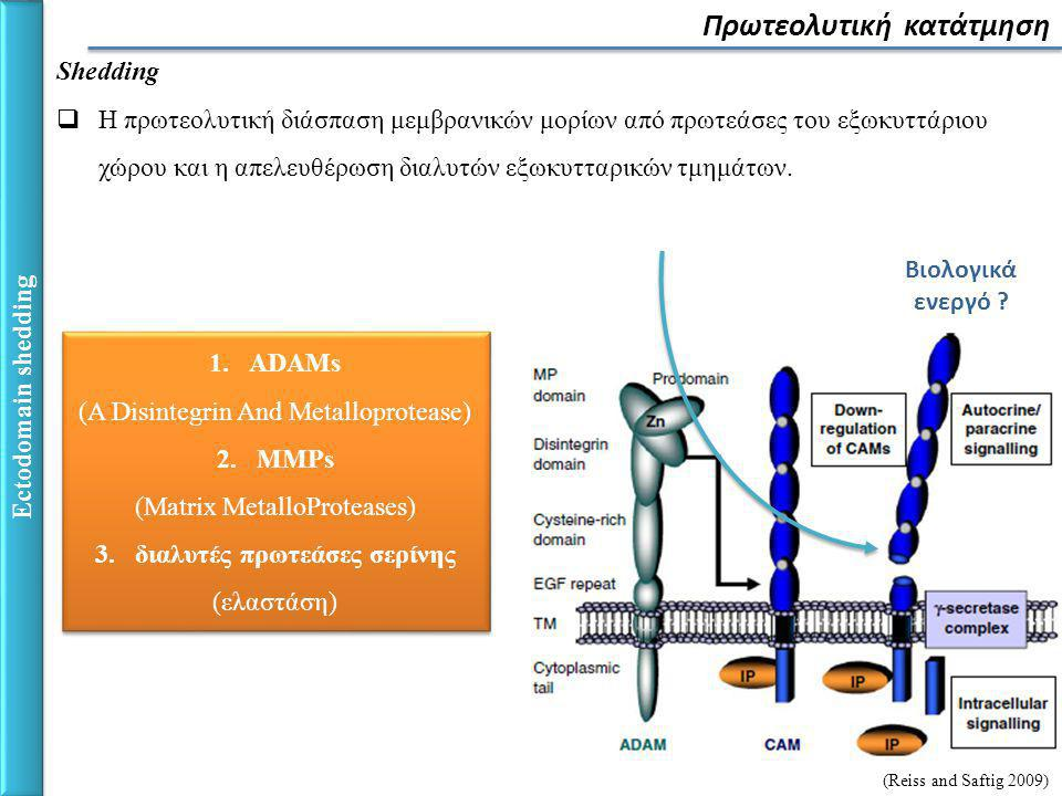 Ectodomain shedding Πρωτεολυτική κατάτμηση Shedding  Η πρωτεολυτική διάσπαση μεμβρανικών μορίων από πρωτεάσες του εξωκυττάριου χώρου και η απελευθέρωση διαλυτών εξωκυτταρικών τμημάτων.