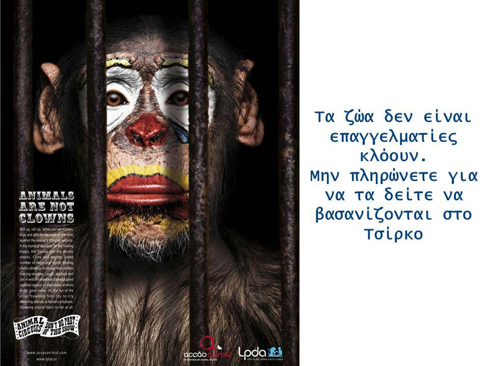 Τα ζώα δεν είναι επαγγελματίες κλόουν. Μην πληρώνετε για να τα δείτε να βασανίζονται στο Τσίρκο