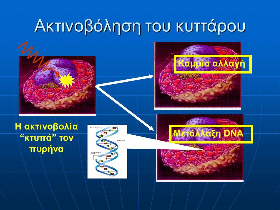 Αποτελέσματα ακτινοβόλησης κυττάρου Μετάλλαξη DNA Το κύτταρο επιζεί μεταλλαγμένο Απώτερα αποτελέσματα Θάνατος κυττάρου Επιδιόρθωση Βλάβης Άμεσα αποτελέσματα Επιζόν κύτταρο