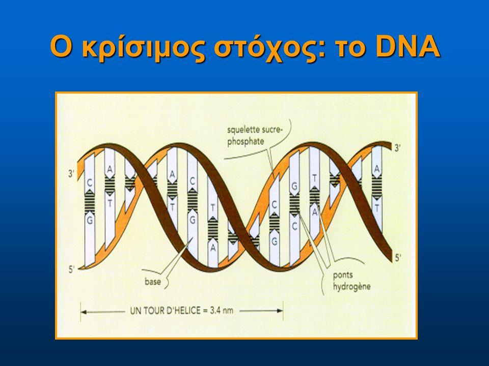 Ο κρίσιμος στόχος: το DNA
