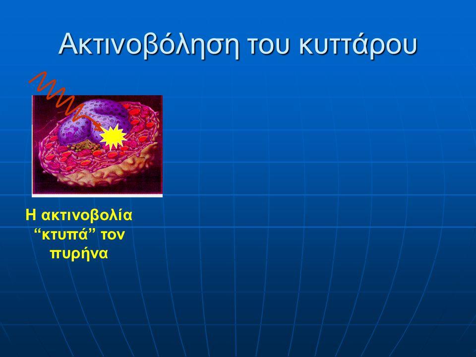 Ακτινοβόληση του κυττάρου Η ακτινοβολία κτυπά τον πυρήνα Καμμία αλλαγή Μετάλλαξη DNA