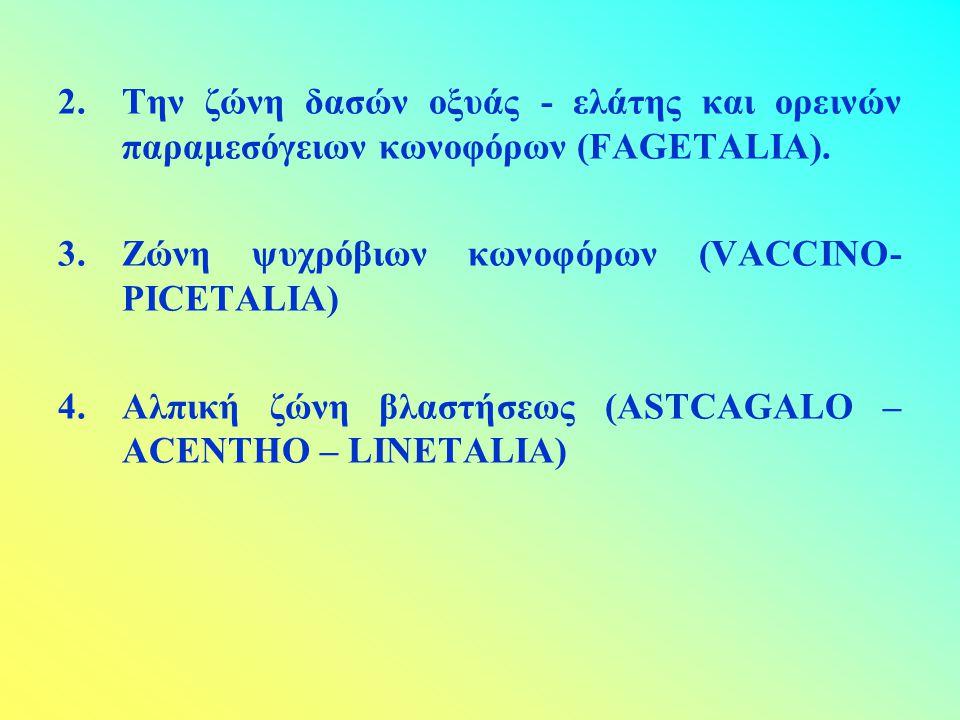 2.Την ζώνη δασών οξυάς - ελάτης και ορεινών παραμεσόγειων κωνοφόρων (FAGETALIA). 3.Ζώνη ψυχρόβιων κωνοφόρων (VACCINO- PICETALIA) 4.Αλπική ζώνη βλαστήσ