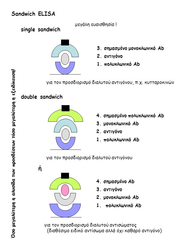Sandwich ELISΑ 3.σημασμένο μονοκλωνικό Ab 2. αντιγόνο 1.