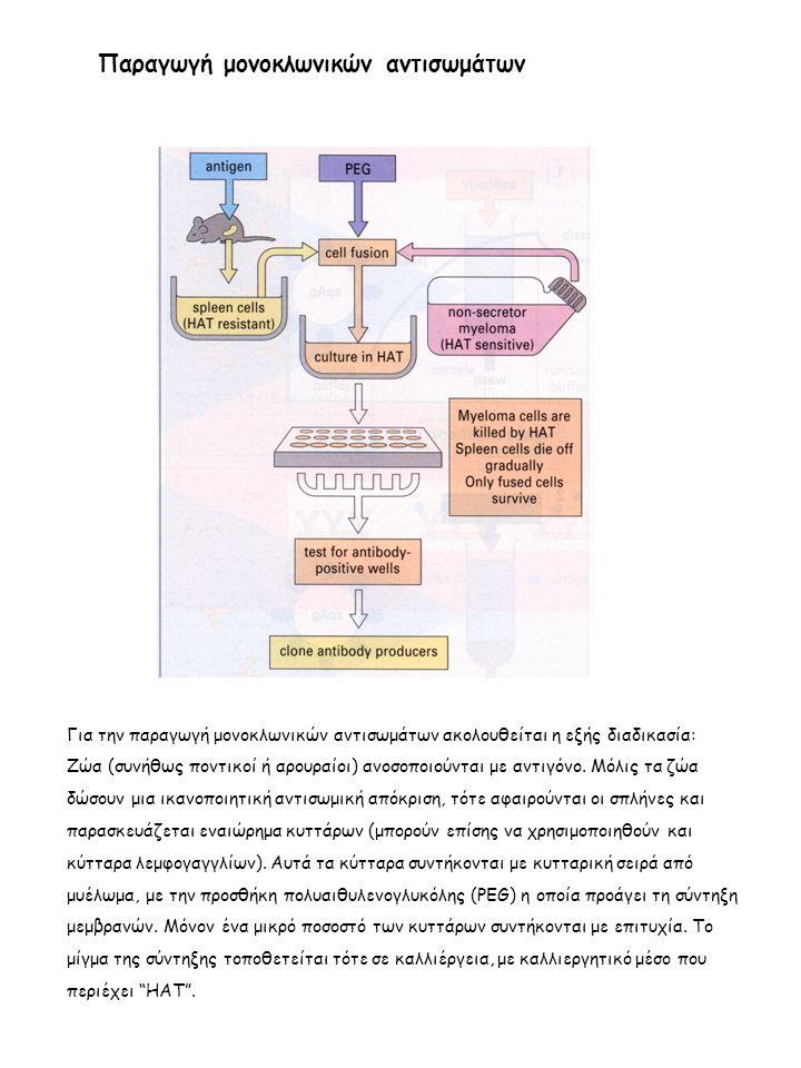 Παραγωγή μονοκλωνικών αντισωμάτων Για την παραγωγή μονοκλωνικών αντισωμάτων ακολουθείται η εξής διαδικασία: Ζώα (συνήθως ποντικοί ή αρουραίοι) ανοσοποιούνται με αντιγόνο.