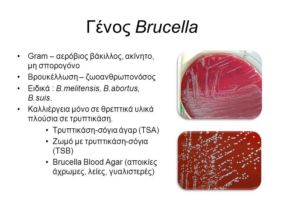 Γένος Brucella Gram – αερόβιος βάκιλλος, ακίνητο, μη σπορογόνο Βρουκέλλωση – ζωοανθρωπονόσος Ειδικά : B.melitensis, B.abortus, B.suis. Καλλιέργεια μόν