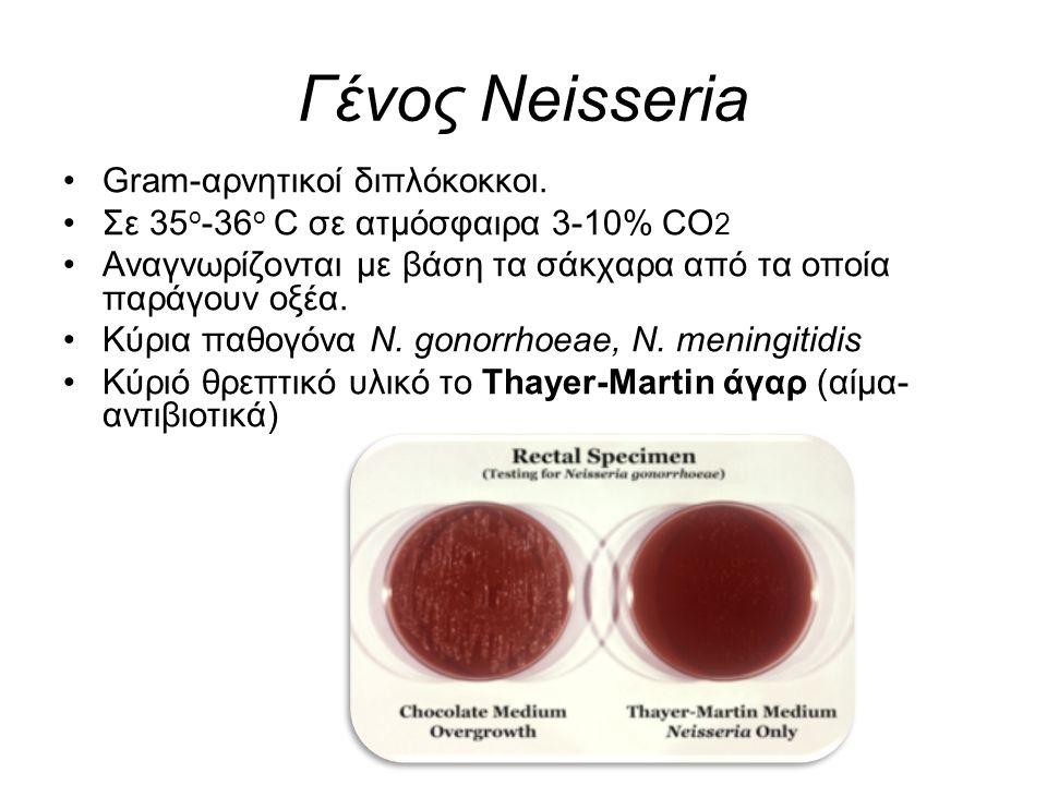 Γένος Neisseria Gram-αρνητικοί διπλόκοκκοι. Σε 35 ο -36 ο C σε ατμόσφαιρα 3-10% CO 2 Αναγνωρίζονται με βάση τα σάκχαρα από τα οποία παράγουν οξέα. Κύρ