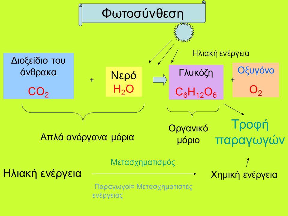 Διοξείδιο του άνθρακα CO 2 + Νερό H 2 O Γλυκόζη C 6 H 12 O 6 Οξυγόνο Ο 2 + Φωτοσύνθεση Απλά ανόργανα μόρια Οργανικό μόριο Ηλιακή ενέργεια Τροφή παραγω