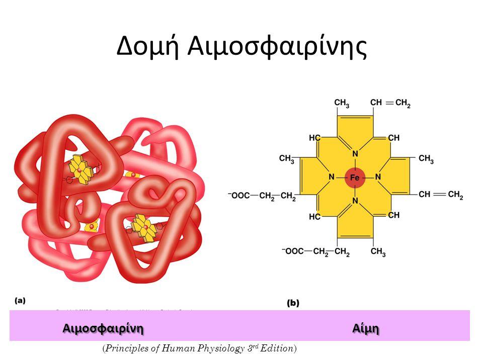Δομή Αιμοσφαιρίνης ( Principles of Human Physiology 3 rd Edition ) ΑιμοσφαιρίνηΑίμη