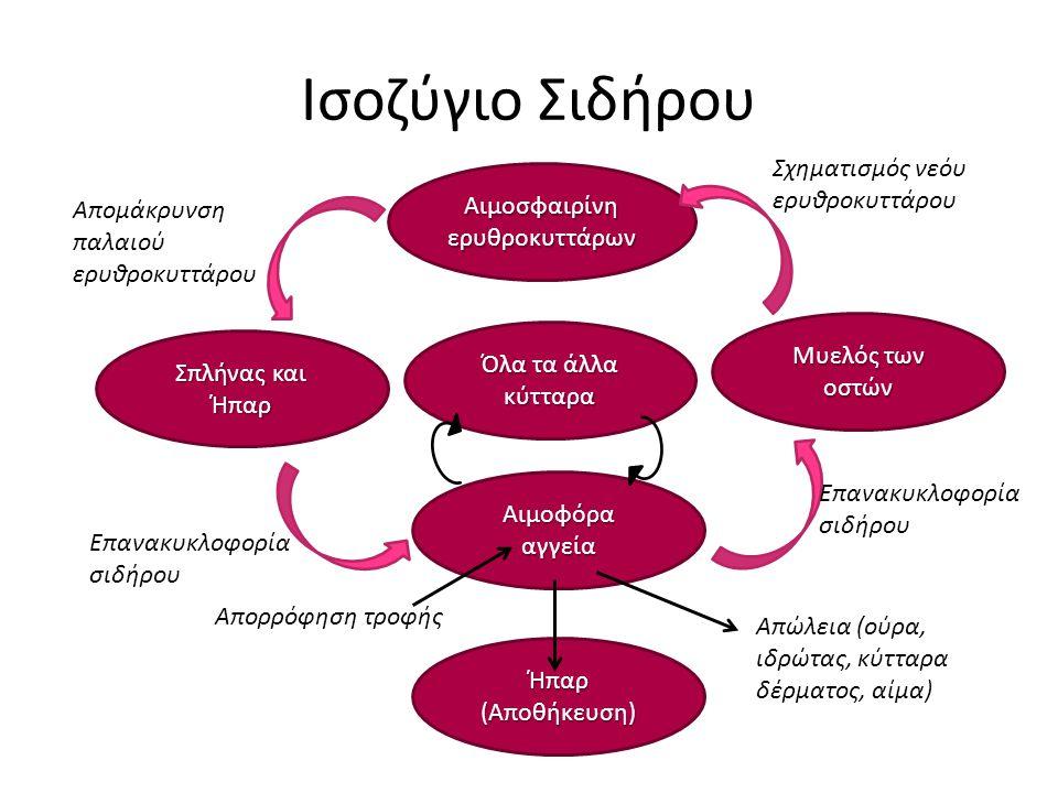 Ισοζύγιο Σιδήρου Αιμοσφαιρίνη ερυθροκυττάρων Σπλήνας και Ήπαρ Αιμοφόρα αγγεία Μυελός των οστών Ήπαρ (Αποθήκευση) Απομάκρυνση παλαιού ερυθροκυττάρου Επανακυκλοφορία σιδήρου Απορρόφηση τροφής Απώλεια (ούρα, ιδρώτας, κύτταρα δέρματος, αίμα) Επανακυκλοφορία σιδήρου Σχηματισμός νεόυ ερυθροκυττάρου Όλα τα άλλα κύτταρα