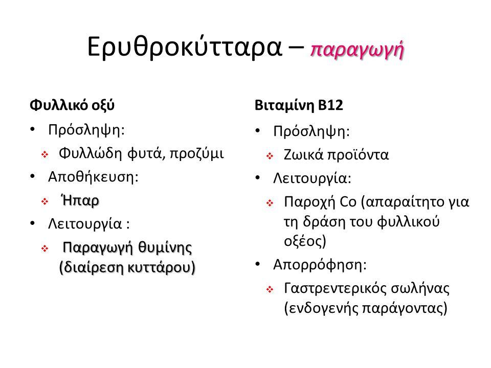 παραγωγή Ερυθροκύτταρα – παραγωγή Φυλλικό οξύ Πρόσληψη:  Φυλλώδη φυτά, προζύμι Αποθήκευση: Ήπαρ  Ήπαρ Λειτουργία : Παραγωγή θυμίνης (διαίρεση κυττάρου)  Παραγωγή θυμίνης (διαίρεση κυττάρου) Βιταμίνη Β12 Πρόσληψη:  Ζωικά προϊόντα Λειτουργία:  Παροχή Cο (απαραίτητο για τη δράση του φυλλικού οξέος) Απορρόφηση:  Γαστρεντερικός σωλήνας (ενδογενής παράγοντας)
