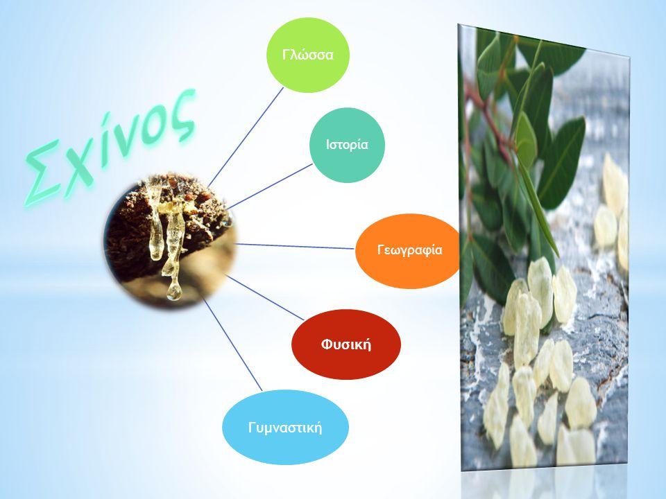 Καλλιεργούνται κυρίως οι αρσενικοί, επειδή είναι πιο παραγωγικοί.