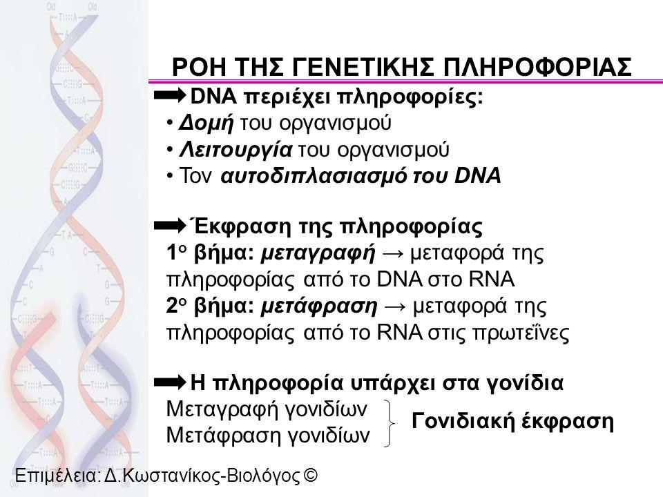 Κεντρικό δόγμα Βιολογίας (F.Crick, 1958) DNA → RNA → πρωτεΐνες Σήμερα λόγω: 1) ύπαρξης ιών με γενετικό υλικό RNA 2) του ενζύμου αντίστροφη μεταγραφάση που χρησιμοποιεί ως καλούπι το RNA για να συνθέσει DNA 3) ύπαρξης ορισμένων ιών στους οποίους το RNA αυτοδιπλασιάζεται Το κεντρικό δόγμα της Βιολογίας γίνεται: DNA ⇄ RNA → πρωτεΐνες Νουκλεϊκά οξέα → πρωτεΐνες Επιμέλεια: Δ.Κωστανίκος-Βιολόγος ©