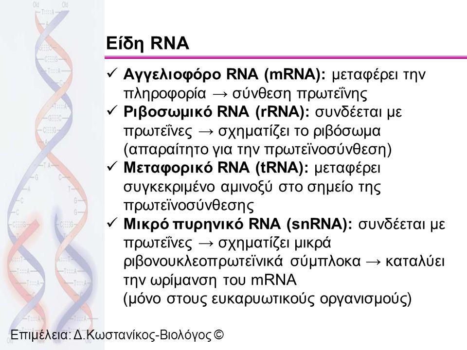 Επιμέλεια: Δ.Κωστανίκος-Βιολόγος © Είδη RNA Αγγελιοφόρο RNA (mRNA): μεταφέρει την πληροφορία → σύνθεση πρωτεΐνης Ριβοσωμικό RNA (rRNA): συνδέεται με π