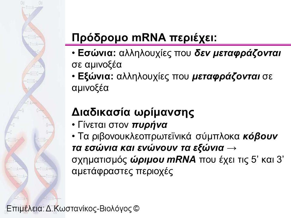 Επιμέλεια: Δ.Κωστανίκος-Βιολόγος © Πρόδρομο mRNA περιέχει: Εσώνια: αλληλουχίες που δεν μεταφράζονται σε αμινοξέα Εξώνια: αλληλουχίες που μεταφράζονται