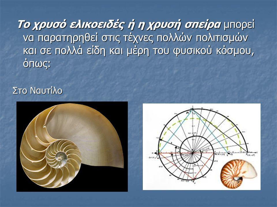Το χρυσό ελικοειδές ή η χρυσή σπείρα μπορεί να παρατηρηθεί στις τέχνες πολλών πολιτισμών και σε πολλά είδη και μέρη του φυσικού κόσμου, όπως: Το χρυσό