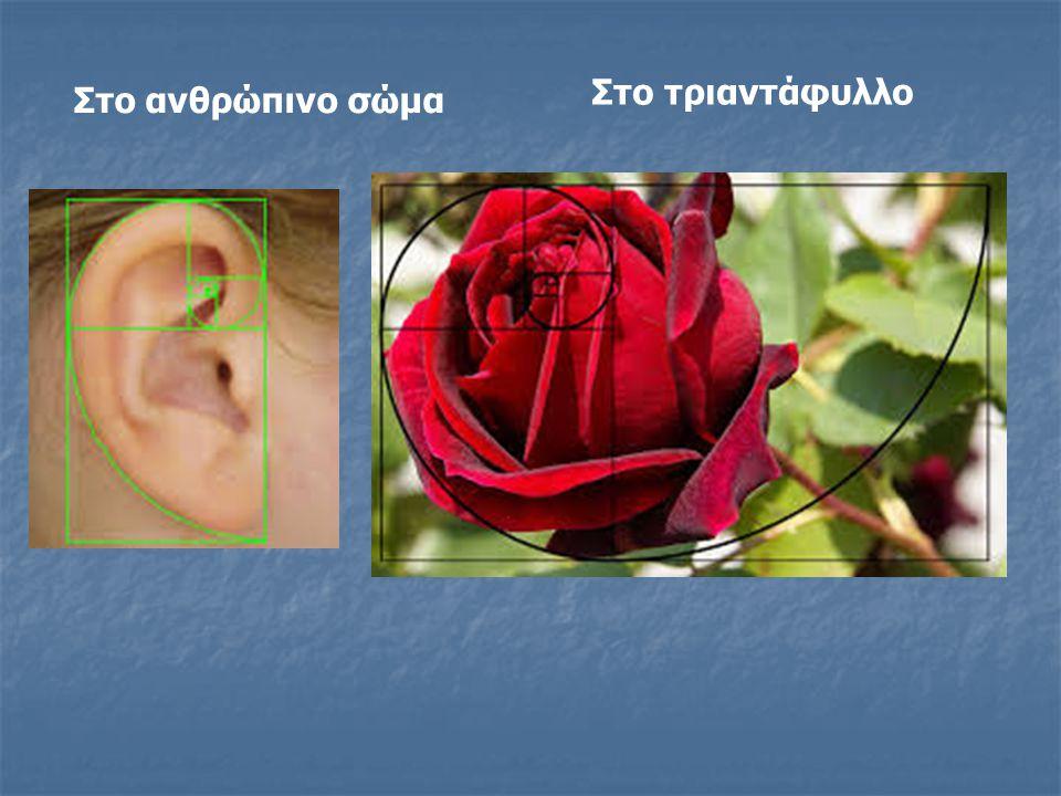 Στο ανθρώπινο σώμα Στο τριαντάφυλλο