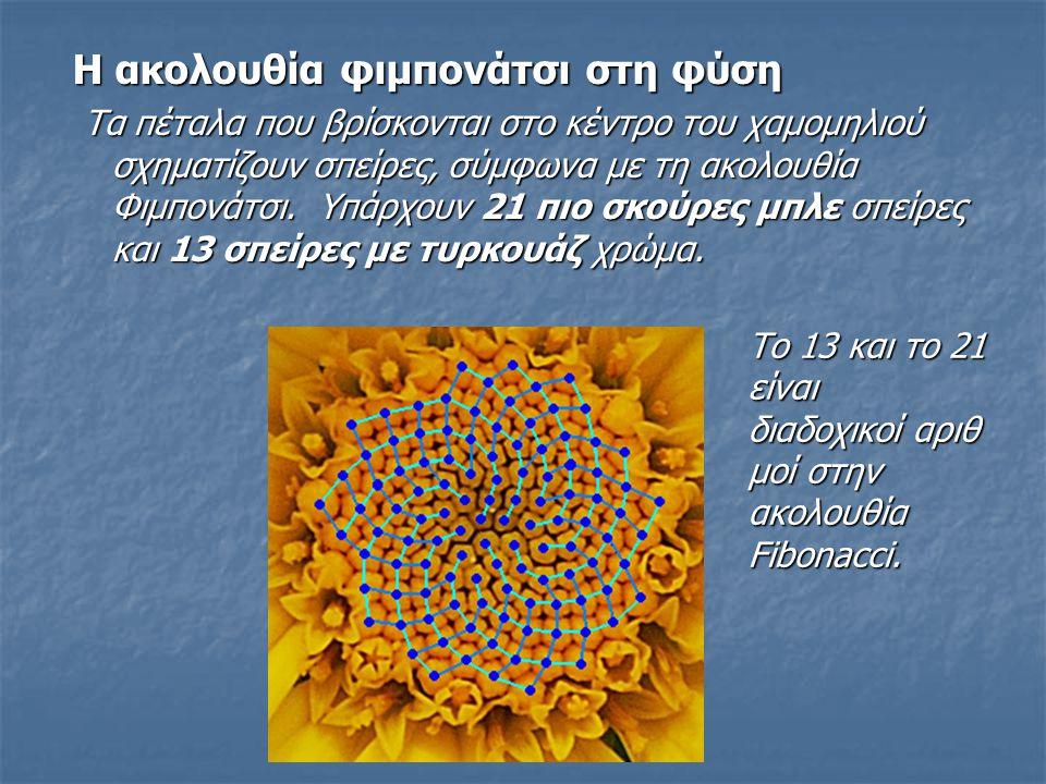 Η ακολουθία φιμπονάτσι στη φύση Τα πέταλα που βρίσκονται στο κέντρο του χαμομηλιού σχηματίζουν σπείρες, σύμφωνα με τη ακολουθία Φιμπονάτσι. Υπάρχουν 2