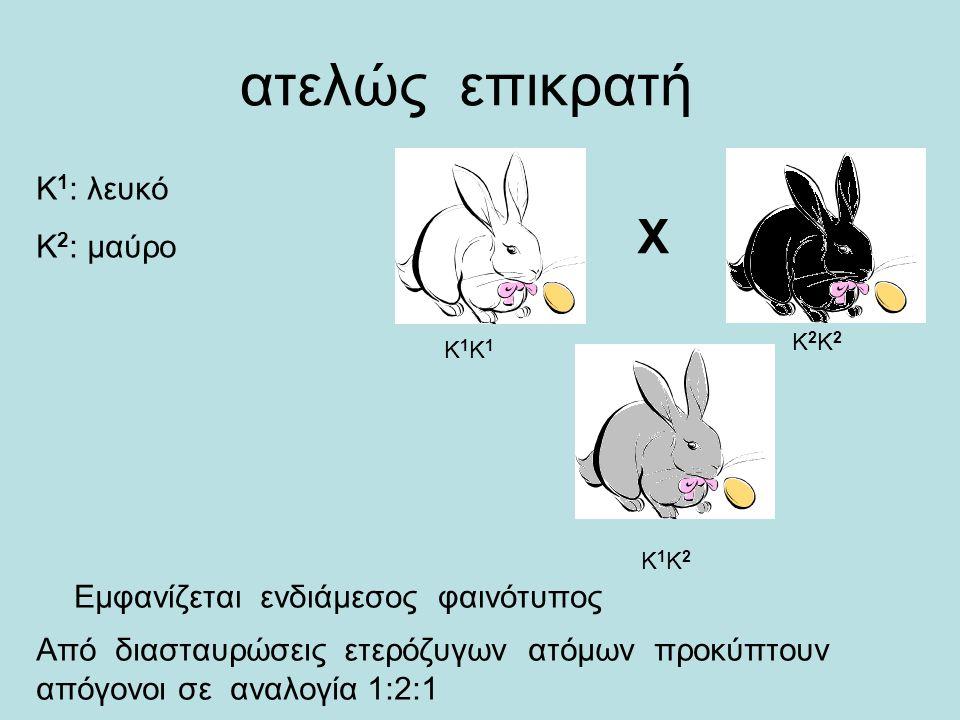 ατελώς επικρατή X Κ1Κ1Κ1Κ1 Κ1Κ2Κ1Κ2 Κ2Κ2Κ2Κ2 Κ 1 : λευκό Κ 2 : μαύρο Εμφανίζεται ενδιάμεσος φαινότυπος Από διασταυρώσεις ετερόζυγων ατόμων προκύπτουν απόγονοι σε αναλογία 1:2:1