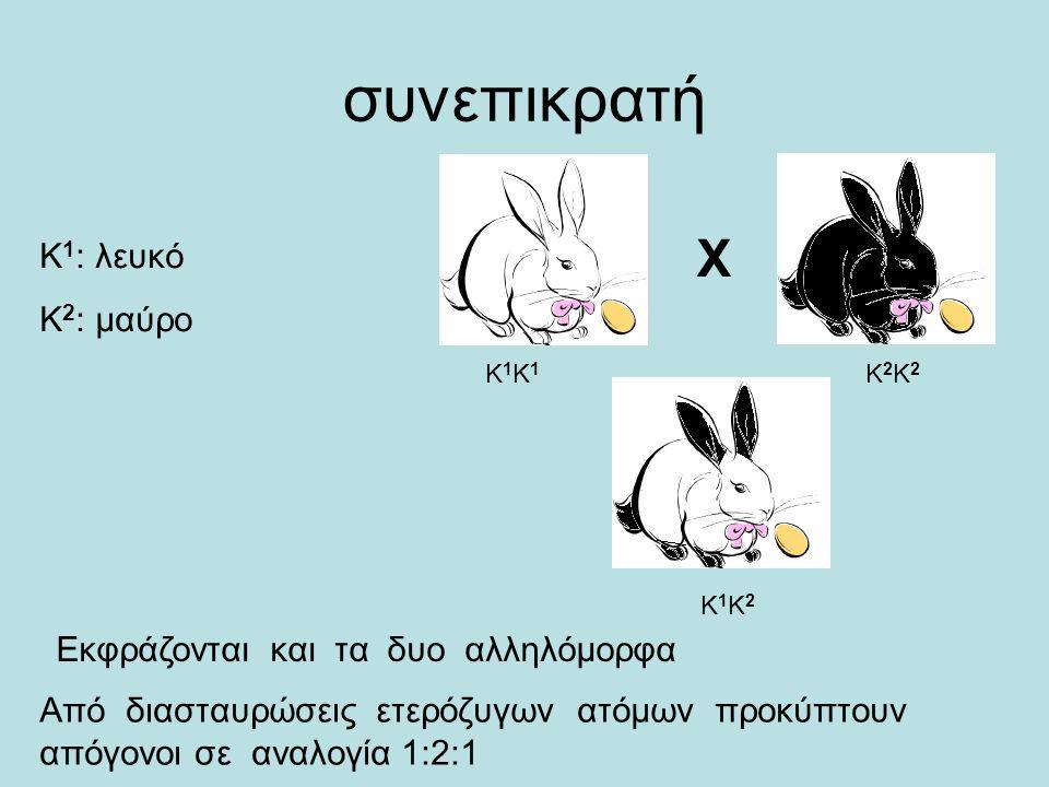X συνεπικρατή Κ 1 : λευκό Κ 2 : μαύρο Κ1Κ1Κ1Κ1 Κ2Κ2Κ2Κ2 Κ1Κ2Κ1Κ2 Εκφράζονται και τα δυο αλληλόμορφα Από διασταυρώσεις ετερόζυγων ατόμων προκύπτουν απόγονοι σε αναλογία 1:2:1