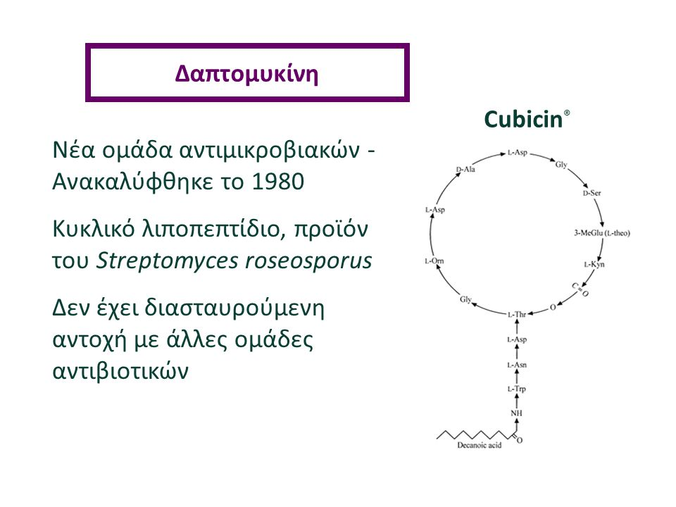 Cubicin ® Νέα ομάδα αντιμικροβιακών - Ανακαλύφθηκε τo 1980 Kυκλικό λιποπεπτίδιο, προϊόν του Streptomyces roseosporus Δεν έχει διασταυρούμενη αντοχή με