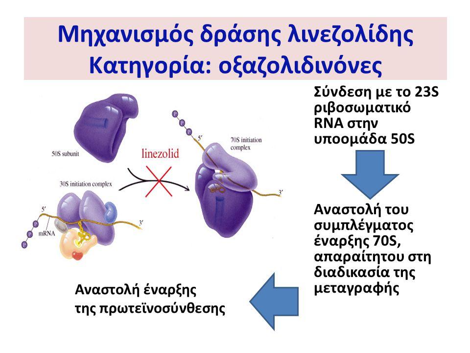 Μηχανισμός δράσης λινεζολίδης Κατηγορία: οξαζολιδινόνες Σύνδεση με το 23S ριβοσωματικό RNA στην υποομάδα 50S Αναστολή του συμπλέγματος έναρξης 70S, απ