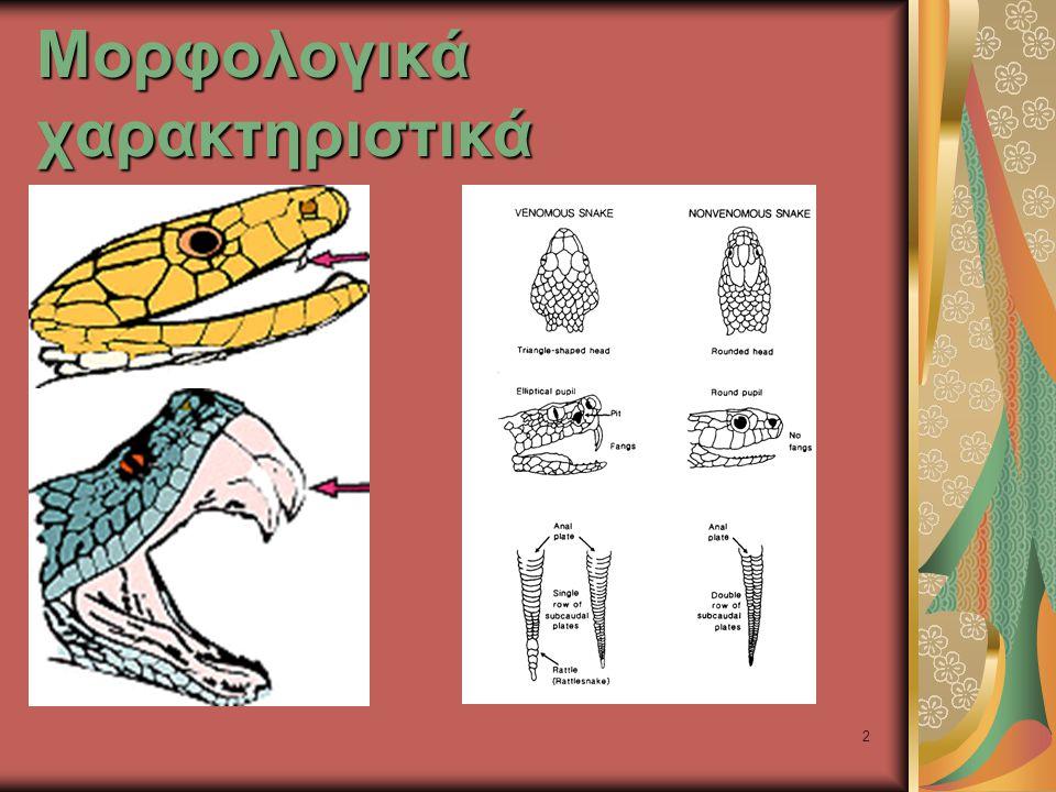 33 Τοπικές βλάβες Death adders (Acanthophis spp.)