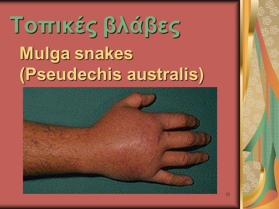 25 Τοπικές βλάβες Mulga snakes (Pseudechis australis)