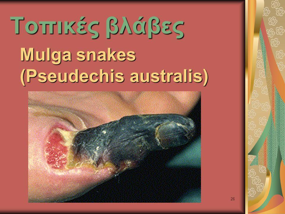 26 Τοπικές βλάβες Mulga snakes (Pseudechis australis)