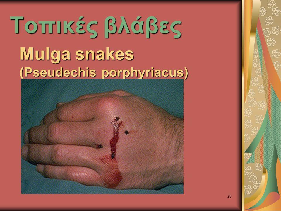 28 Τοπικές βλάβες Mulga snakes (Pseudechis porphyriacus)