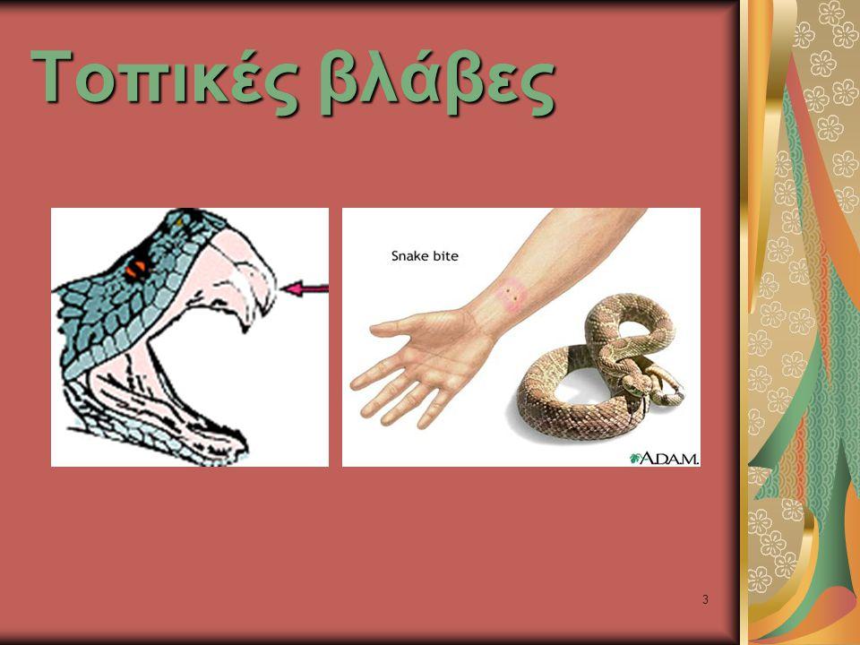 34 Τοπικές βλάβες Whip snakes (Demansia psammophis)