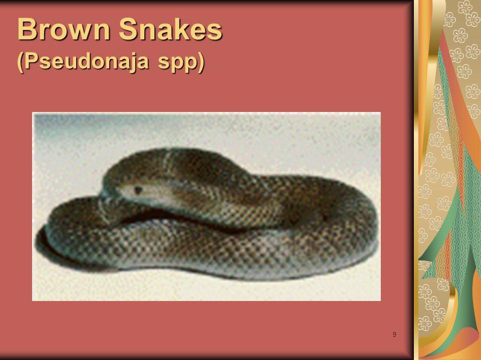 10 Τοπικές βλάβες από Brown Snakes (Pseudonaja spp)