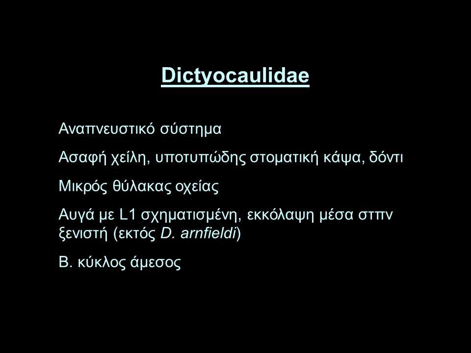 Dictyocaulidae Αναπνευστικό σύστημα Ασαφή χείλη, υποτυπώδης στοματική κάψα, δόντι Μικρός θύλακας οχείας Αυγά με L1 σχηματισμένη, εκκόλαψη μέσα στπν ξενιστή (εκτός D.