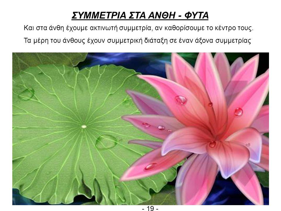 ΣΥΜΜΕΤΡΙΑ ΣΤΑ ΑΝΘΗ - ΦΥΤΑ Και στα άνθη έχουμε ακτινωτή συμμετρία, αν καθορίσουμε το κέντρο τους.
