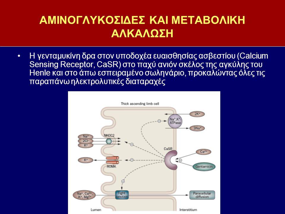 ΑΜΙΝΟΓΛΥΚΟΣΙΔΕΣ ΚΑΙ ΜΕΤΑΒΟΛΙΚΗ ΑΛΚΑΛΩΣΗ H γενταμυκίνη δρα στον υποδοχέα ευαισθησίας ασβεστίου (Calcium Sensing Receptor, CaSR) στο παχύ ανιόν σκέλος τ