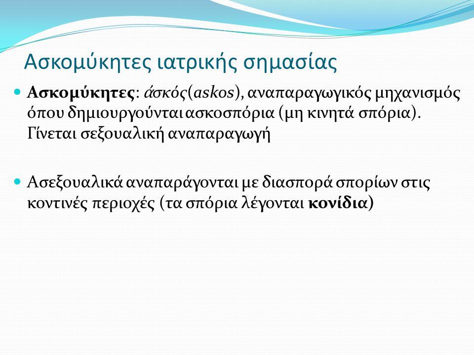 Ασκομύκητες ιατρικής σημασίας Ασκομύκητες: ἀ σκός(askos), αναπαραγωγικός μηχανισμός όπου δημιουργούνται ασκοσπόρια (μη κινητά σπόρια).